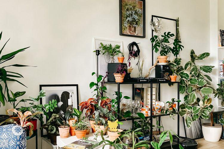 Berbagai macam tanaman hias, Sumber : kompas.com