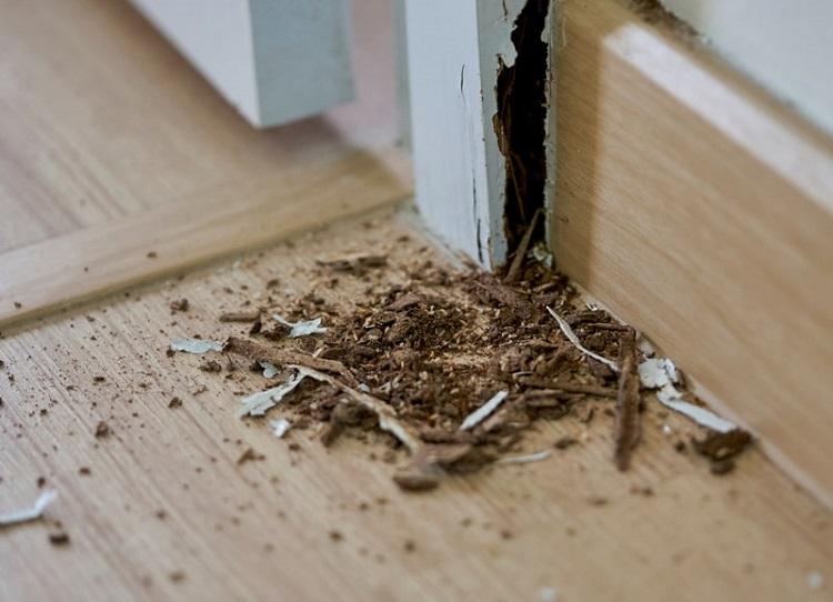 Rayap dapat menyebabkan kerugian properti, Sumber : terminix.com